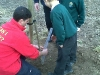 diamond-jubilee-tree-planting-protecting-the-new-trees-from-rabbits