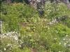 Ashbank wildflowers in bloom