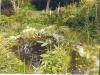 Ashbank Pond