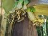 Larkrise Bananas