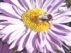 Ashbank flower