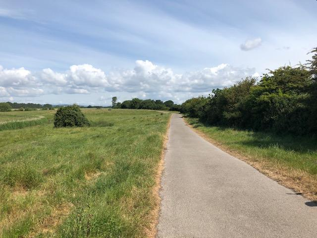 tarmac farm track in Fisher Lane with grass verge on the left and green trees on the right